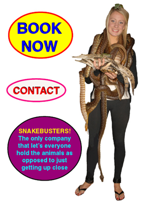 Corporate Reptile parties Melbourne